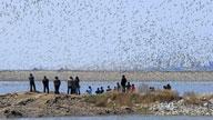 <div class='new_lzbiao'>湿地观鸟</div>