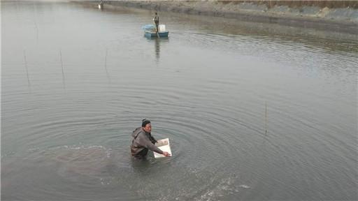 海洋红农场积极开展养殖生产苗种投入工作